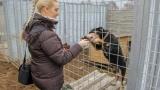 2017_psi-utulek-bzenec_djs-4-charity_12